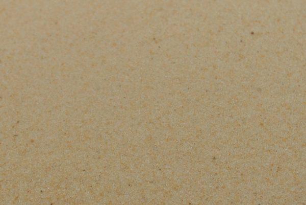 Reptile Desert Sand